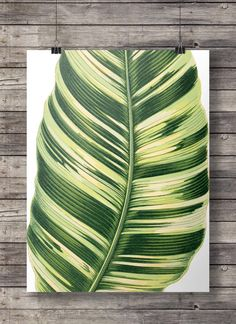 Printable art | Vintage banana palm leaf botanical illustration | Tropical jungle vintage | Printable wall art | nature jungalow decor MADE WITH LOVE ♥ 16x20 print, easily reduced to 8x10 ____________________________ Print as many times as you like, fine for personal and small Gcse Art Sketchbook, Banana Palm, Leaf Art, Patterns In Nature, Free Prints, Botanical Illustration, As You Like, Printable Wall Art, Portrait
