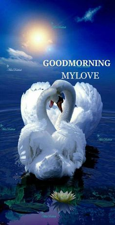 Good morning, have a wonderful day my friend! Swan Love, Beautiful Swan, Beautiful Birds, Love Images, Beautiful Images, Good Morning My Love, Pretty Birds, Colorful Birds, Nature Wallpaper