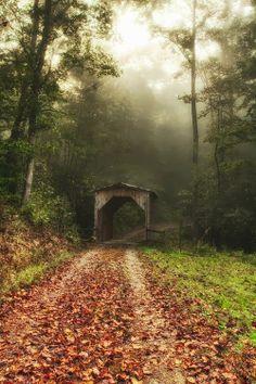 - porte forestière..