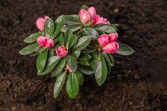 Суккуленты, Растения, На Открытом Воздухе