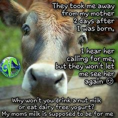 not your mother not your milk; why finance animal cruelty? #vegan