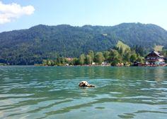 Hund am Weissensee #erfahrungsbericht #urlaubmithund #weissensee