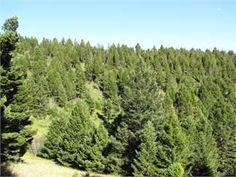 Deer Lodge/Garrison, Powell County, Montana Land For Sale - 19 Acres