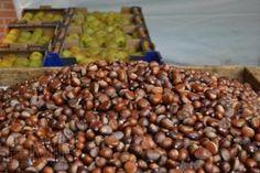 A continuación se registran todas las palabras relacionadas con los frutos que figuran en el diccionario de la Real Academia Española y que se usan o han sido usadas en España.  Aceituna 'fruto del olivo'. Aceituna de la reina 'la de mayor tamaño y superior calidad que se cría en Andalucía'. Aceituna de verdeo 'la que es apta para cogerla en verde y aliñarla para consumirla como fruto'. Aceituna dulzal 'clase de aceituna redonda y muy fina ...