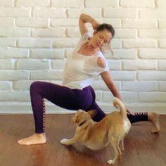 Yoga Dog As always yogi Babette and I are inspiring empowering & supporting each other to practice! Her down dog is So. Yoga Dog, Corgi, Animals, Corgis, Animales, Animaux, Animal, Animais