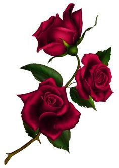 Rose Stem by Autumns-Muse on DeviantArt Flower Images, Flower Art, Desenho Pop Art, Rose Flower Wallpaper, Rose Stem, Botanical Flowers, Beautiful Roses, Vintage Flowers, Red Roses
