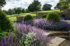 I love lavender! Want my whole garden filled with lovely lavender!
