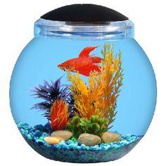 fish bowl stones - Google Search