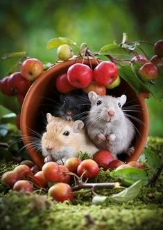 Happy Friday Hamsters in cup with apples Animals And Pets, Baby Animals, Funny Animals, Cute Animals, Cute Creatures, Beautiful Creatures, Animals Beautiful, Hamsters, Rodents