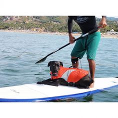 RC Pet Canine Lifejacket | The Cheshire Horse