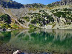 Muntii Retezat ascund peste 80 de lacuri glaciare, printre care si Taul Tapului. Aici se cresc bujorul de munte, gingasa floare de colt, traiesc ferite de privirea omului: ursul carpatin, capra neagra si marmota. Crestele alpine sunt spectaculoase, cu inaltimi de peste 2000 de metri.