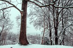 Snowy Walk In Prague by Jenny Rainbow Art Prints For Home, Time Art, New Wave, Prague, Wood Print, Fine Art Photography, Christmas Time, Waves, Rainbow