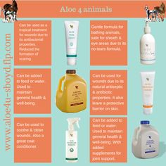 Aloe 4 Animals - These products are so gentle on your animals. Great for speeding up the wound healing process and reducing the formation of scaring. Forever Living Aloe Vera, Forever Aloe, Aloe Benefits, Forever Freedom, Forever Living Business, Chocolate Slim, Forever Living Products, Healthy Lifestyle Tips, Aloe Vera Gel