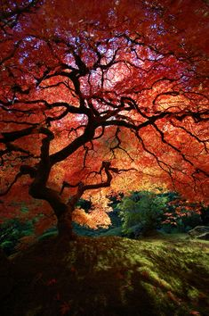 """Japanese Maple Tree Shadows Another shot of """"that"""" maple tree. I love the blue sky peeking through the branches and the depth of the shadows underneath."""