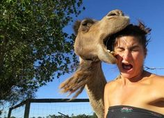 The 'Oops, I Ate Your Face' Camel | The 30 Greatest Animal Photobombs Of 2013