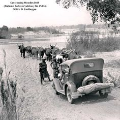 Nick Baalbergen Writes Thought the attached photo may be of interest. It is of a span of oxen about to 'assist' a car across the Moodie's D. Ian Smith, Automobile, Lest We Forget, Roaring Twenties, Zimbabwe, East Africa, Wall Street, Amazing Places, English Language