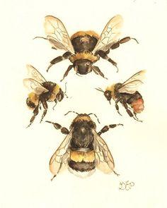 The Flight of the Bumblebee Print 810 nature study naturalist scientific art illustration painting honey bee victorian painting Art And Illustration, Bumble Bee Illustration, Victorian Paintings, Victorian Artwork, Vintage Paintings, Vintage Bee, Bee Art, Belle Photo, Art Inspo