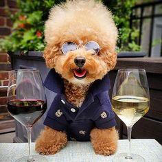 Wine Community & Online Shop (@wineonline_ca) • Instagram photos and videos