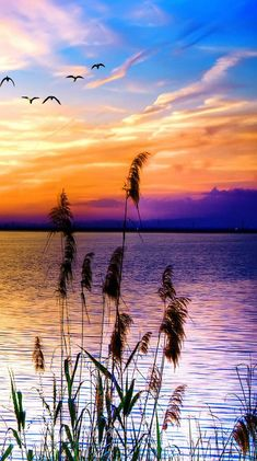 Relaxing sunset with birds relax calm water sunset birds is part of Beautiful scenery photography - 3d Nature Wallpaper, Beautiful Nature Wallpaper, Beautiful Sunset, Beautiful Landscapes, Beautiful Scenery, Hd Wallpaper, Scenery Photography, Landscape Photography, Ocean Photography