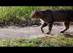 Mały tygrysek :)