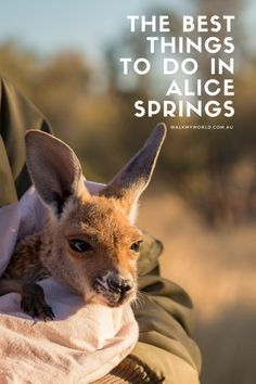 Alice Springs is one of the best places to base yourself for some quintessential Outback experiences. This is our guide to wildlife, hiking, epic waterholes and the best things to do in the centre of Australia. Outback Australia, Visit Australia, Western Australia, Australia Holidays, Travel Couple, Family Travel, Alice Springs Australia, Stuff To Do, Things To Do