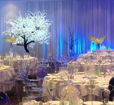 LED Maple Tree & Louis Ghost Chairs available for hire at WED on Beaufort
