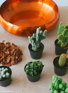 03-decorazione-organizzare mini-cactus-step-by-step, how-to