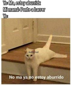 """@gatoscooloficial: """"tiene ideas de diversión raras. . . . #gatoscool😸 #gatos_cool #memesdegatoscool #gatos #gatitos…"""""""