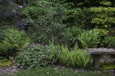 Brooklyn garden Lindsey Taylor gardens