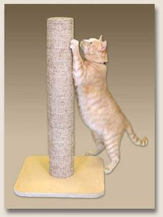 Most cats prefer sisal-covered scratching posts. Top Cat Products makes posts that are tall, sturdy and covered in rough sisal.