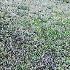 花畑 #landscape