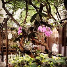 Rio de janeiro #riodejaneiro , #orquideas, #orchids , #phalenopsis