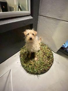 West Highland White Terrier Lot de 4 sets de table et Sous-verre