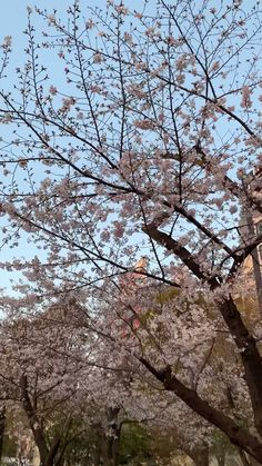 Beautiful Places In Japan, Beautiful Places To Visit, Ballet Dance Videos, Japan Street, Cute Love Images, Nature Sounds, Nihon, Ulzzang Boy, Aesthetic Videos
