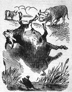 Les deux Taureaux et une Grenouille, Cham