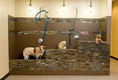 Dogwoods Lodge provides the Des Moines areas with professional dog lodging, daycamp, grooming, and training services. Dog Grooming Shop, Dog Grooming Salons, Dog Washing Station, Pet Corner, Dog Spaces, Pet Spa, Dog Hotel, Dog Salon, Pet Clinic