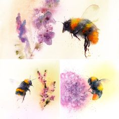 Bumble bees painted by watercolour artist Jane Davies