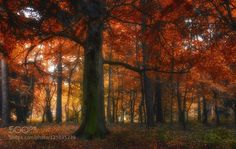 every now and then........ by RudolfMoerkl