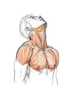 Human Anatomy Drawing, Human Figure Drawing, Figure Drawing Reference, Anatomy Reference, Anatomy Poses, Anatomy Art, Anatomy Sketches, Art Sketches, Anatomy Sculpture