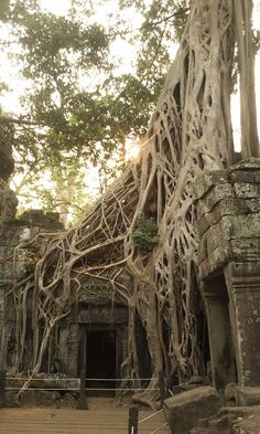 Speak about human vs nature, angkor wat tells who stands thru time