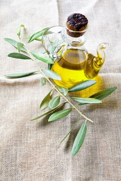olive oil and branch with leaves by IriGri on @creativemarket