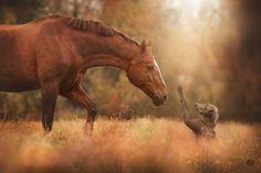 Curiosity #horses