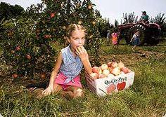 Linvilla Orchard