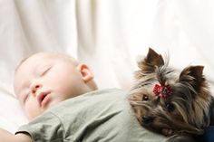 Your house may be baby proofed, but is your dog ready? Learn how to prepare your dog for bringing home a new baby: www.aspca.org/pet-care/virtual-pet-behaviorist/dog-behavior/preparing-your-dog-new-baby