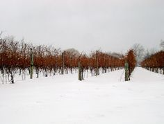 Self-Guided Tours of the Niagara Falls #Wine Region
