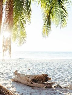 "Via Paradise. Beach palm trees and driftwood in Costa Rica. ""Via Paradise"" beach print at The Sunset Shop by Samba to the Sea. Photography Pics, Types Of Photography, Aerial Photography, Wildlife Photography, Landscape Photography, Beach Pink, The Beach, Sunset Beach, Palm Tree Print"