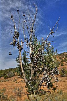 Crazy (Creepy) Shoe Tree!