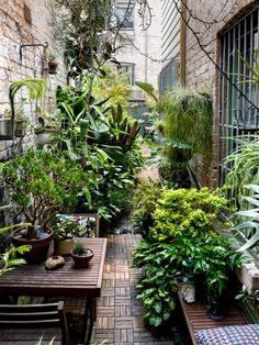 The garden of David Whitworth, on The Design Files.