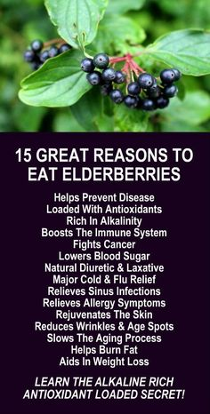 15 Great Reasons To Eat Elderberries. Get healthy and lose weight with our alkaline rich, antioxidant loaded, weight loss products Elderberry Benefits, Elderberry Syrup, Elderberry Recipes, Cold And Flu Relief, Natural Detox Cleanse, Natural Diuretic, Weight Loss Herbs, Lower Blood Sugar, Alkaline Diet