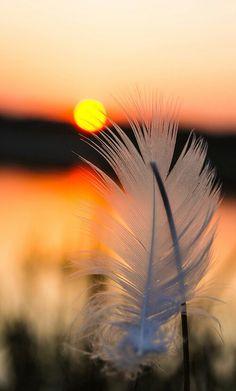 sunset /feather...a wonderful snapshot ...